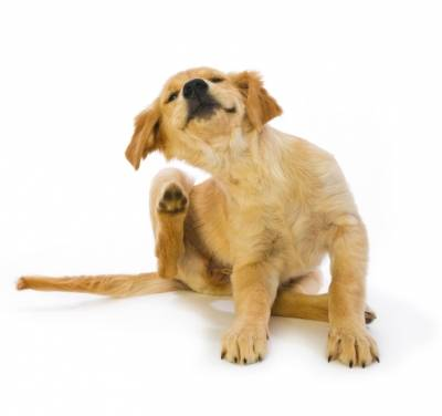 atopisch eczeem hond