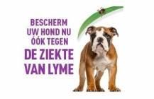 Vaccineer uw hond tegen Lyme