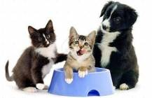 Overzicht diervoeding